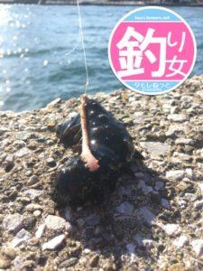 017年1月釣り初めはナマコから