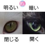猫の目の瞳孔