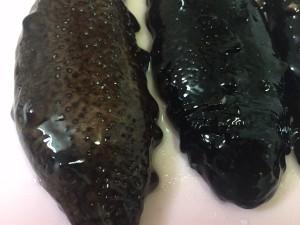 赤ナマコ(左)と黒ナマコ(右)